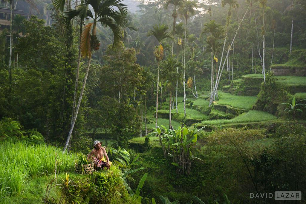 David Lazar - Bali -Ceking