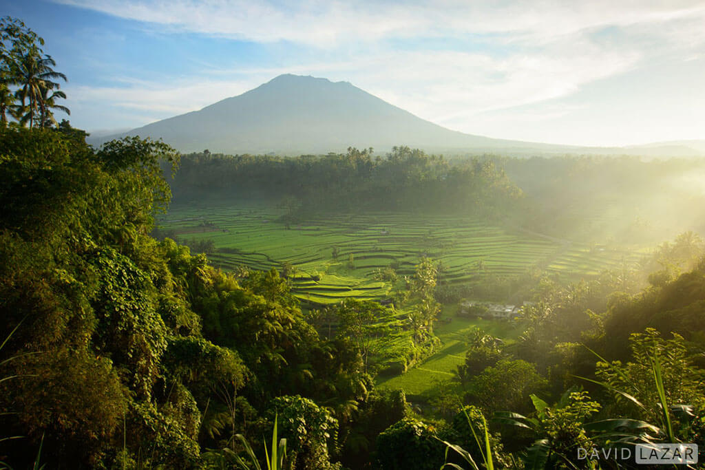 David Lazar - Bali-Mt. Agung Rice Terraces