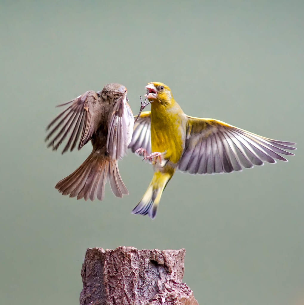 Mark Freeth - birds fighting