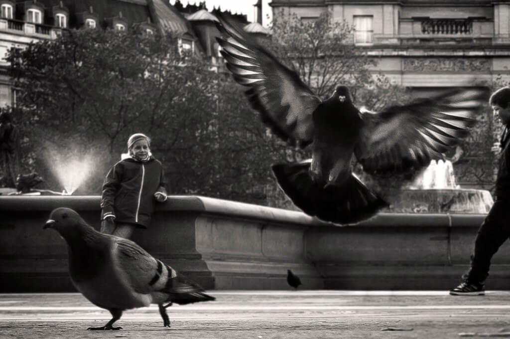 Nozahy pigeons trafalgar square