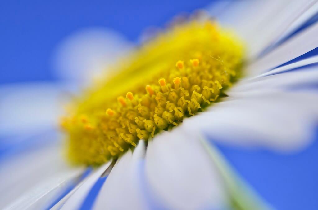 Steven Scott - White flower