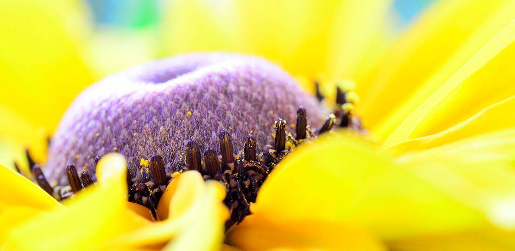 Steven Scott - Macro Yellow Flower Petals