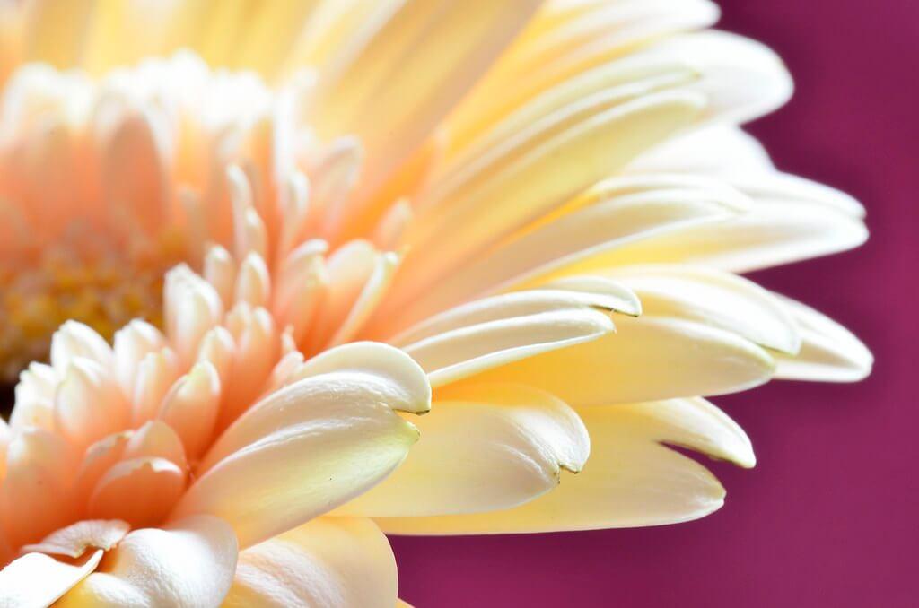 Steven Scott - Macro Flower