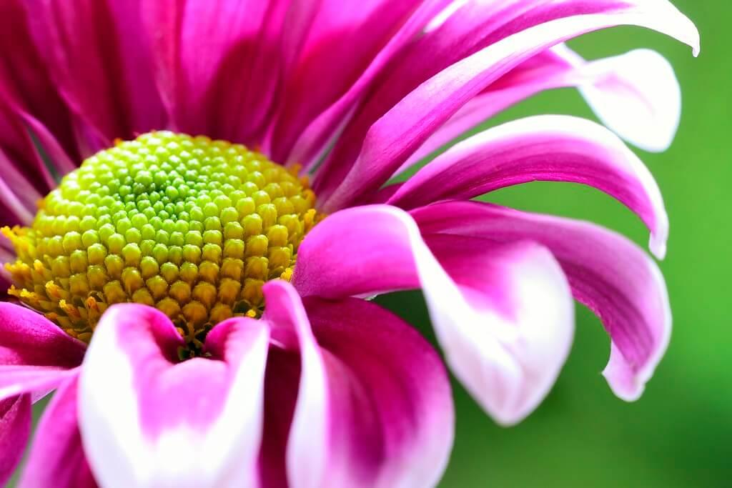 Steven Scott - Purple Flower