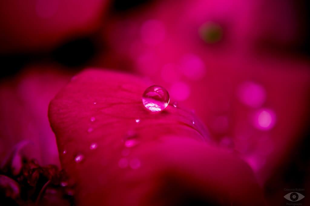 grazynaphotography - raindrop on flower