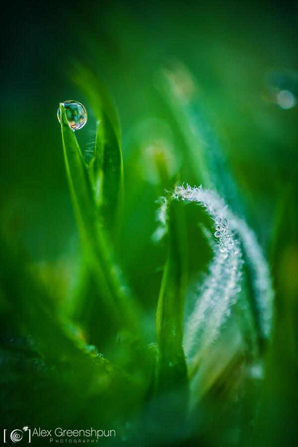 Alex Greenshpun - Dew on Grass