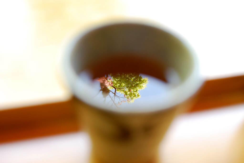 きうこ - maple tree reflection in tea