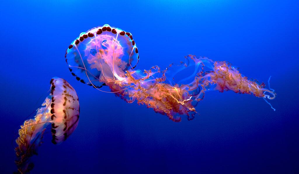 Pedro Szekely - Medusa, Monterey Aquarium, California