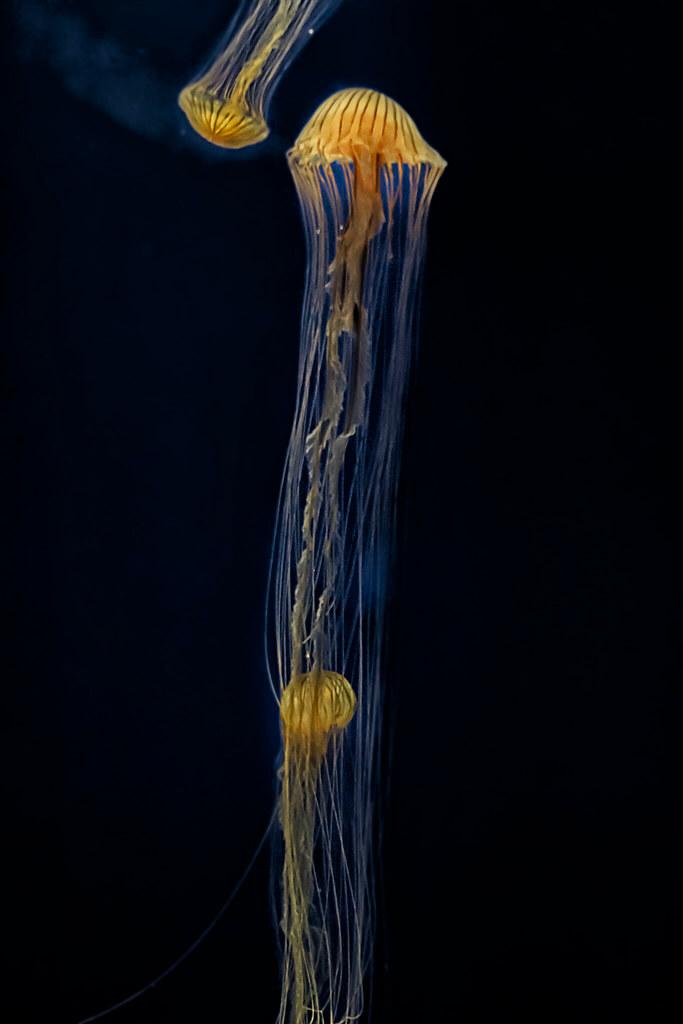 Donnie Nunley - Jellyfish