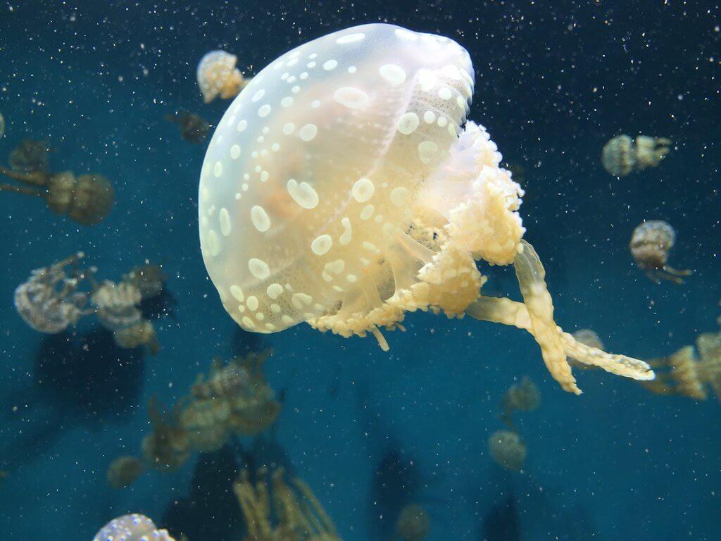 Doug Letterman - Jellyfish