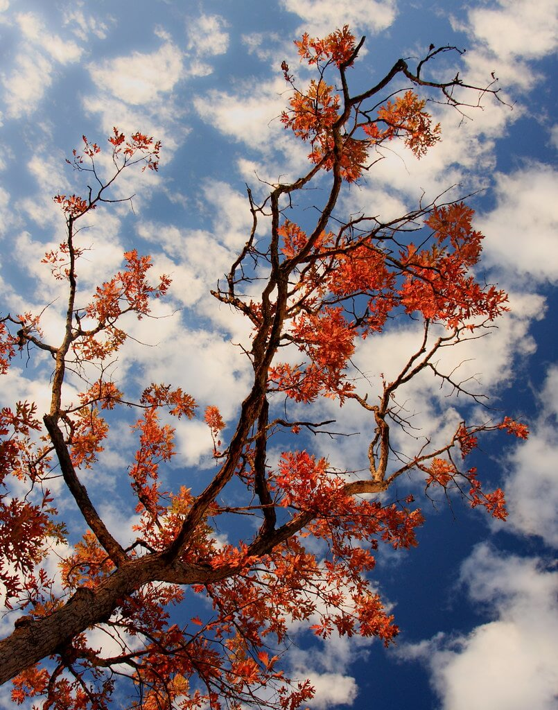 Raffaella De Amicis - Red leaves, blue sky