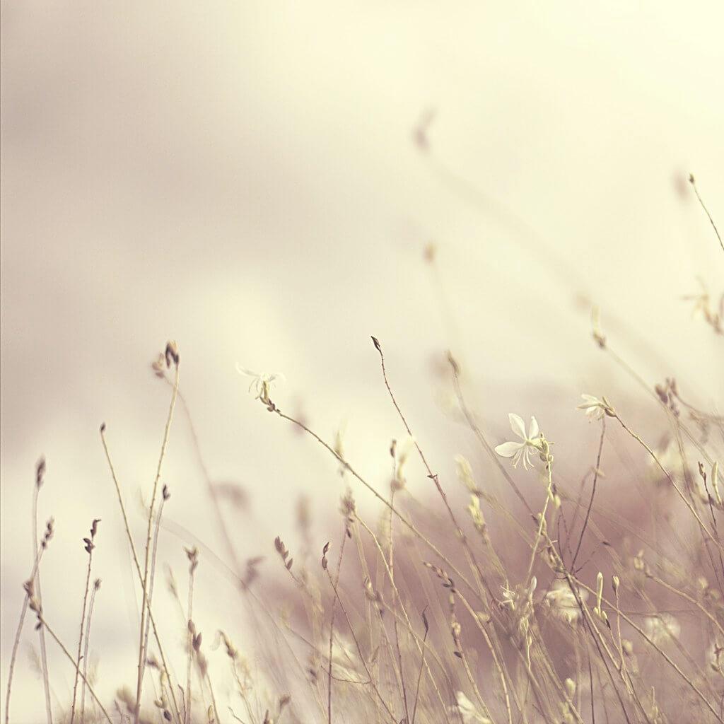 Elizme - grass