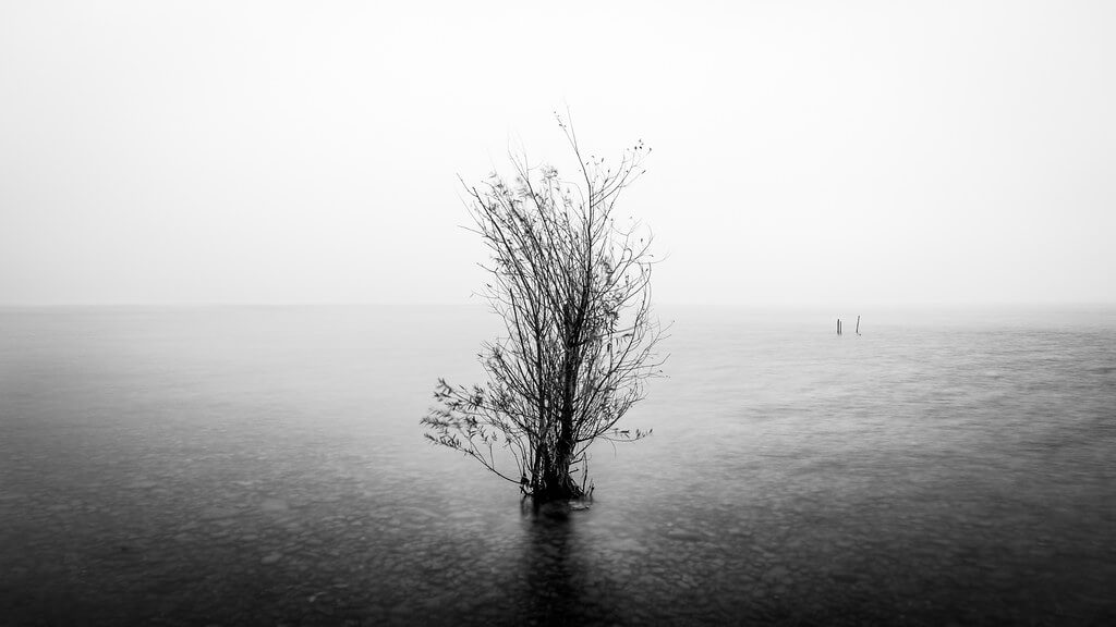 Giuseppe Milo - The lonely tree - Garda lake, Italy