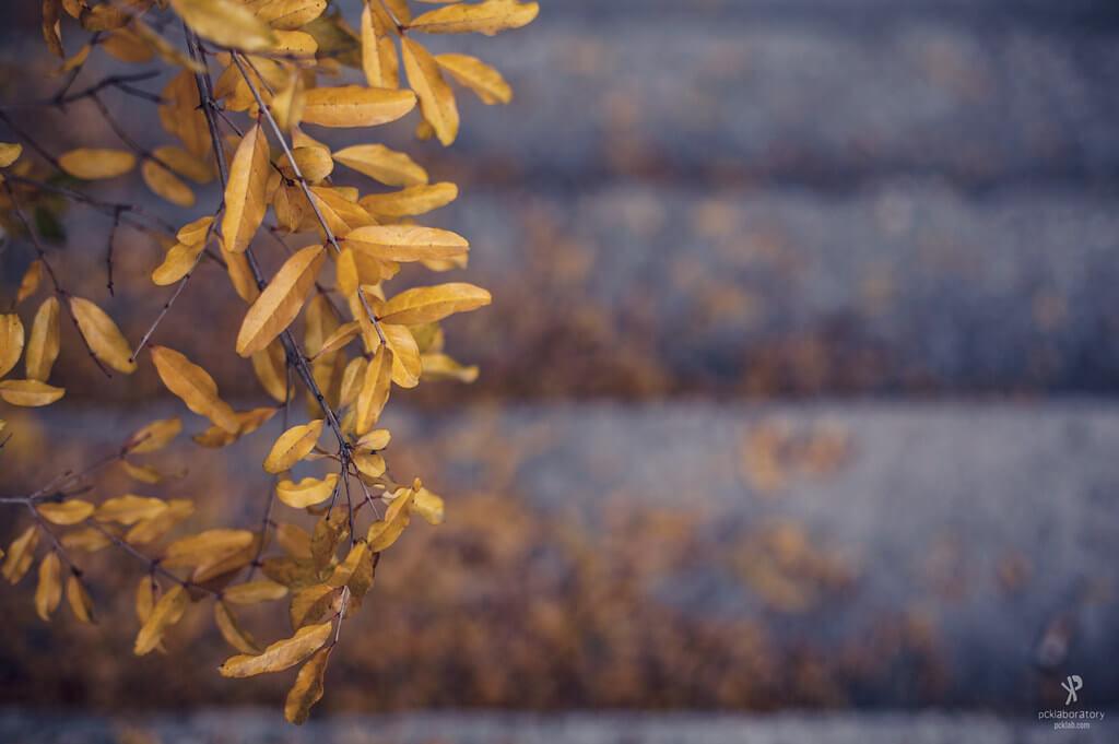 Yane Naumoski - bokeh autumn