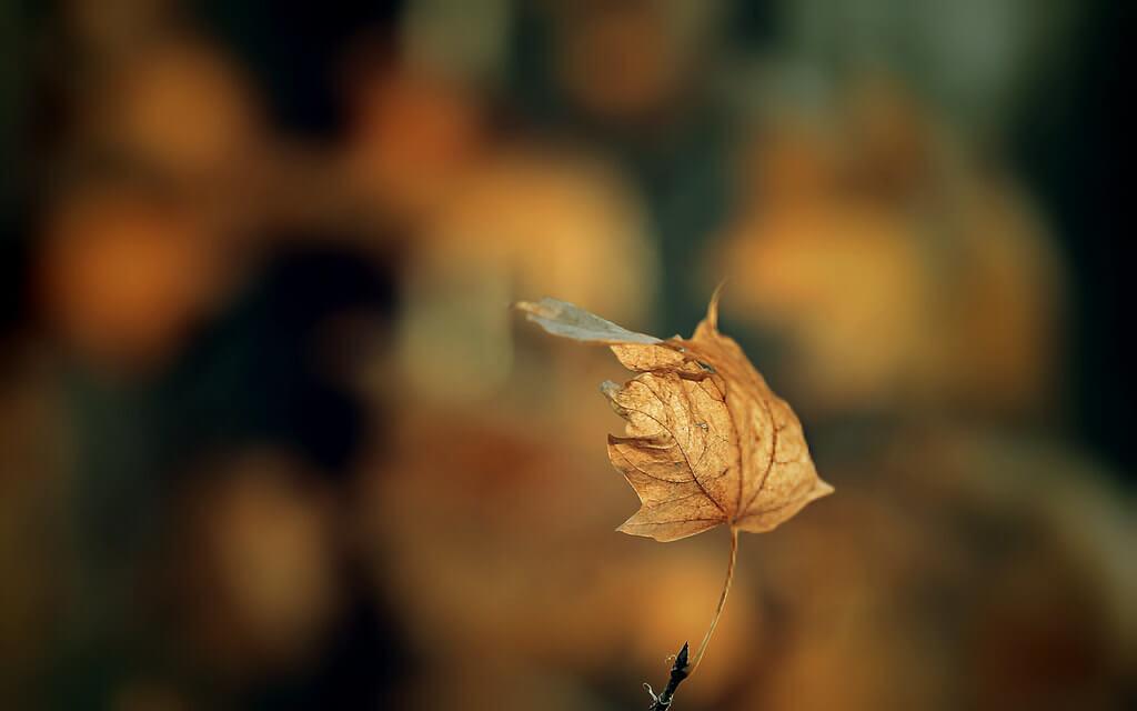 Gabriel Caparó - dead leaf