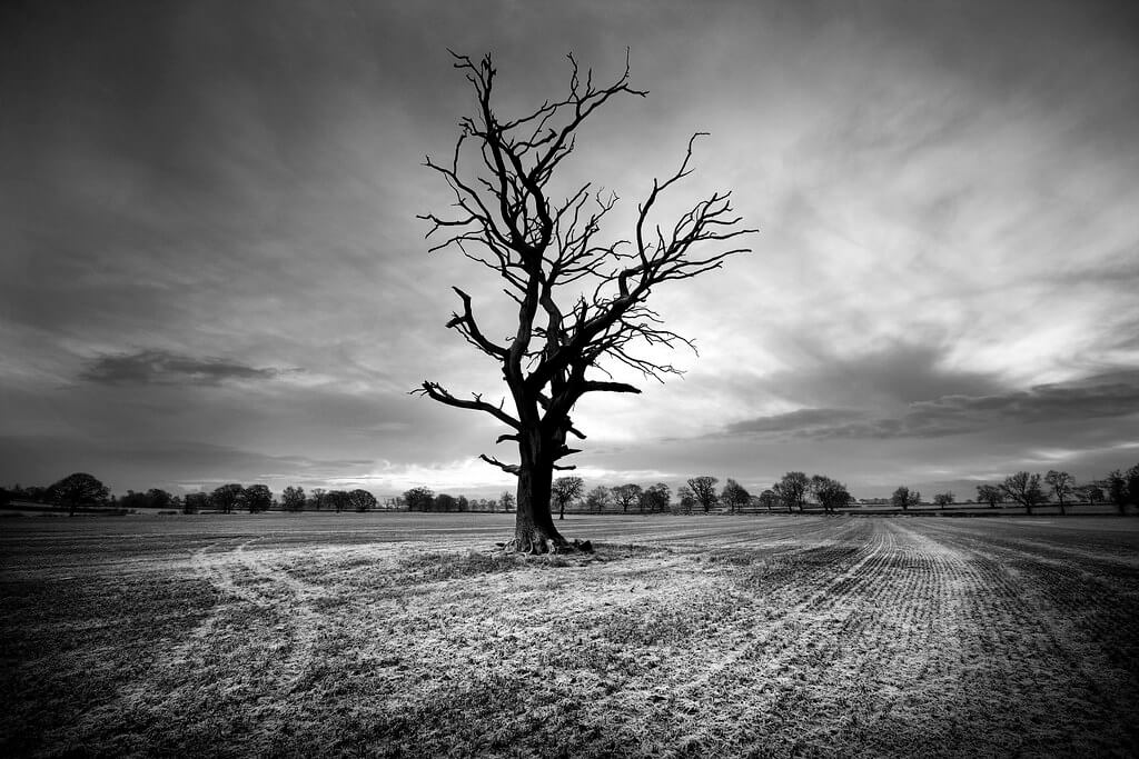 James Drury - dead tree in field