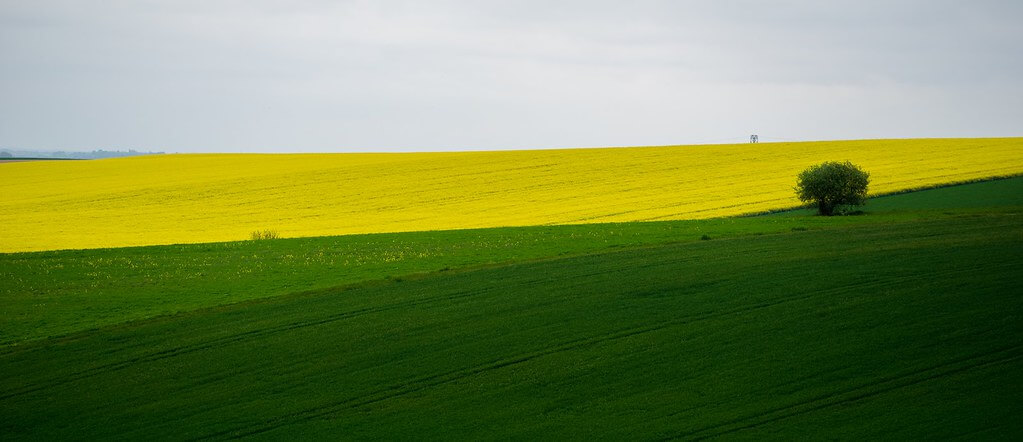 nicolas bello - green and yellow fields