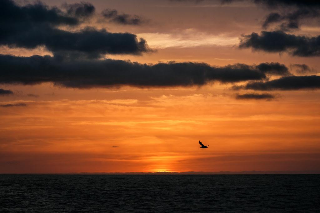 Amine Fassi - Lucky Bird