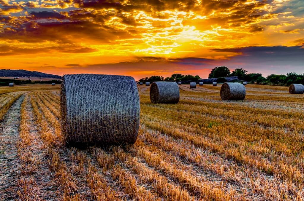 Thomas Thompson hay bales sunset