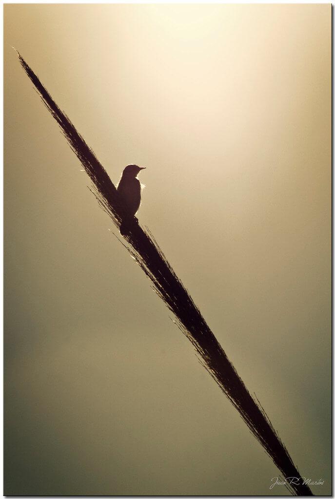 Juan Ramón Martos - bird silhouette