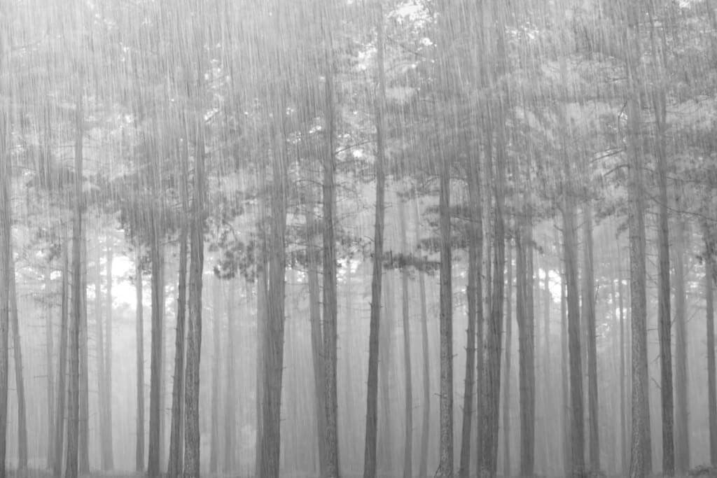 Nick Palmer - Torrential Rain