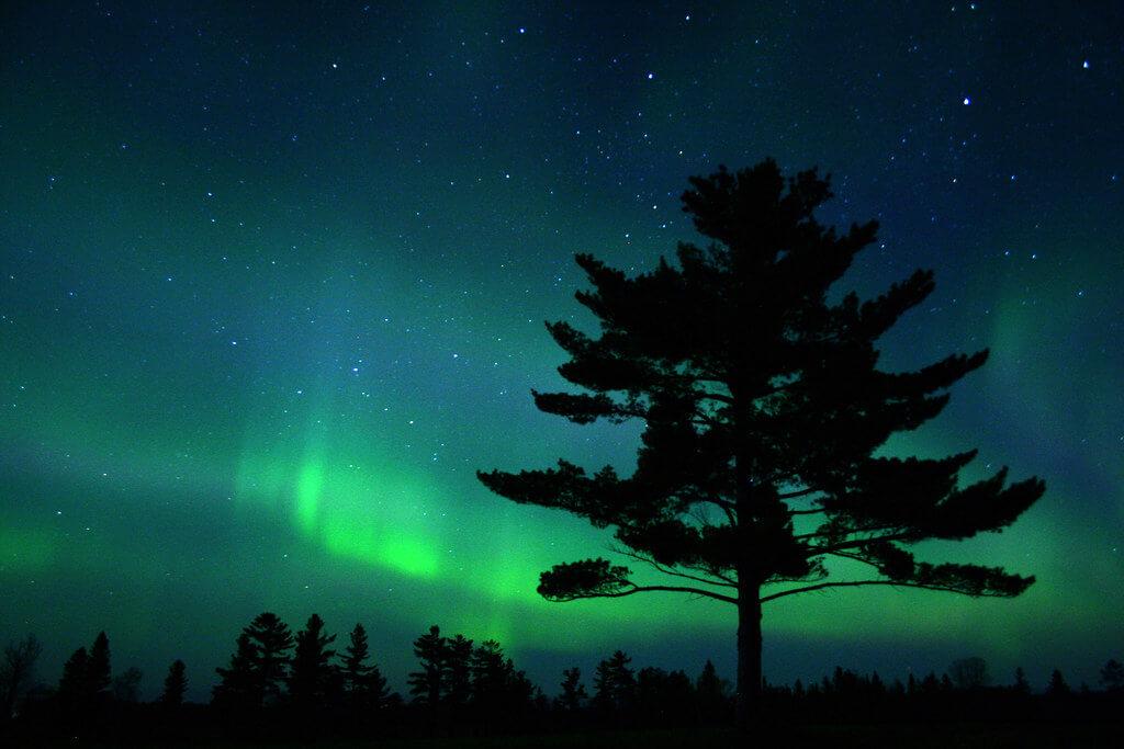 Charlie Stinchcomb - White Pine Silhouette with Aurora