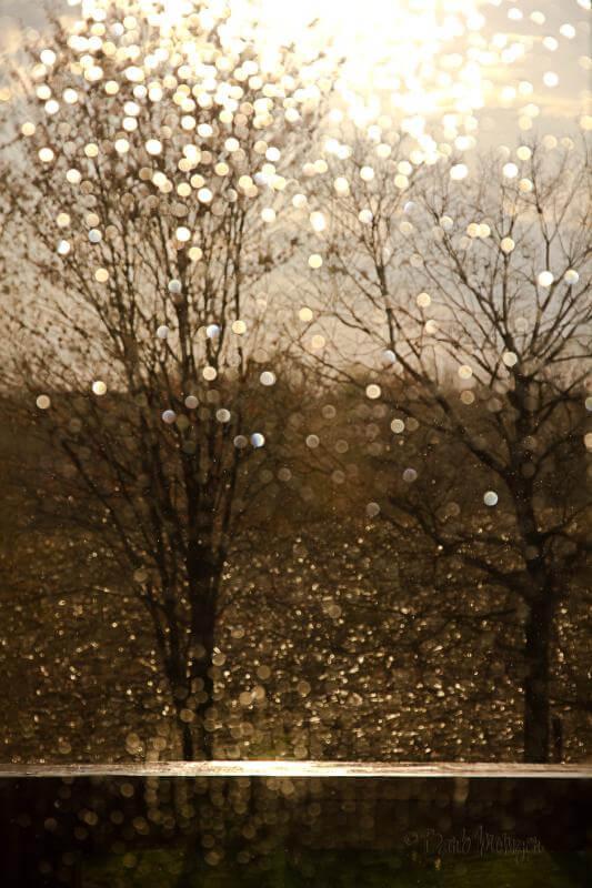 Barb - Bokeh Rain