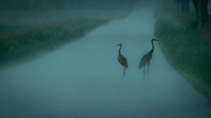 Ralph Russo - Rain Cranes