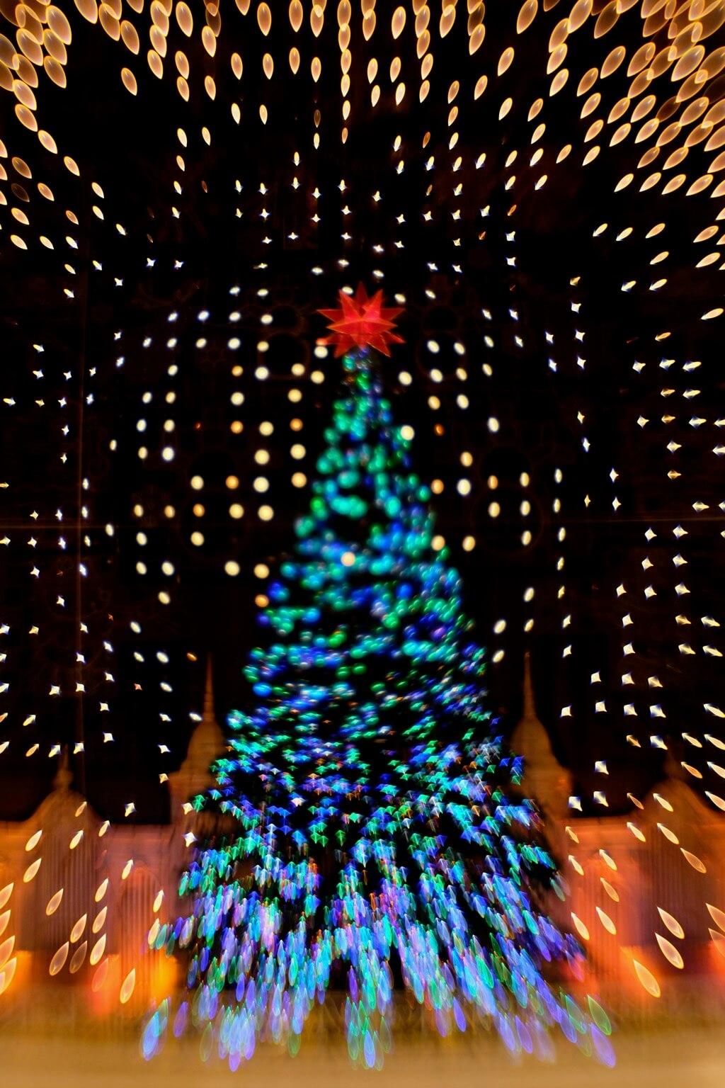 Kathy DiTanna - Macy's Philadelphia Christmas Tree