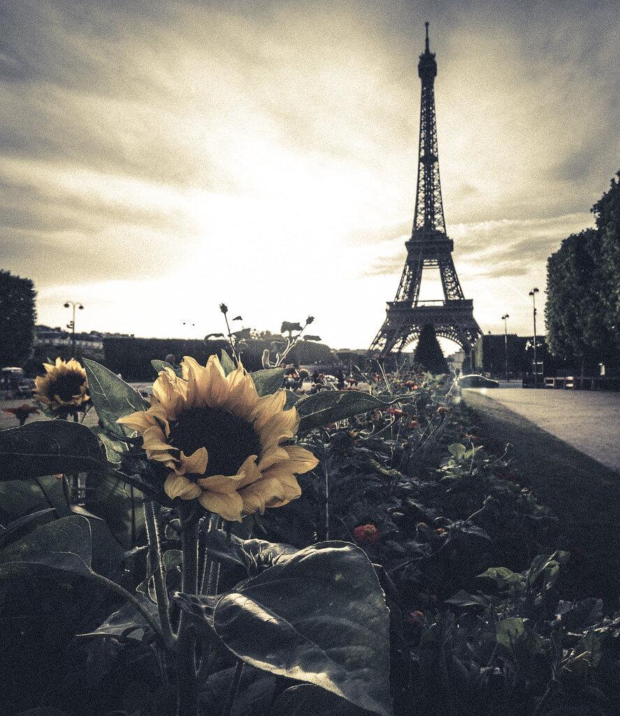 Matthew Johnson - Sunflower Eiffel Tower