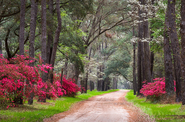 Dave Allen - Charleston South Carolina Edisto Island