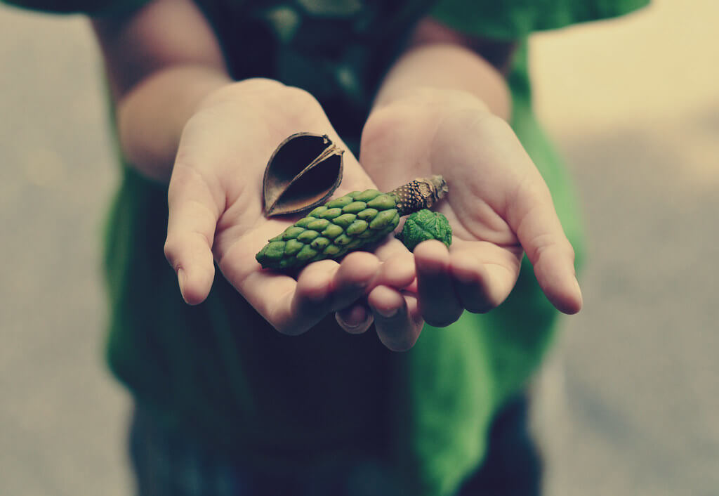 jordan parks - hand holding nature
