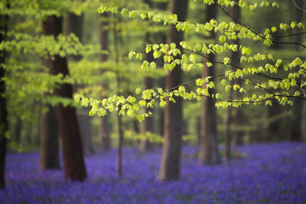 Roelof de Hoog - Forest in the Spring