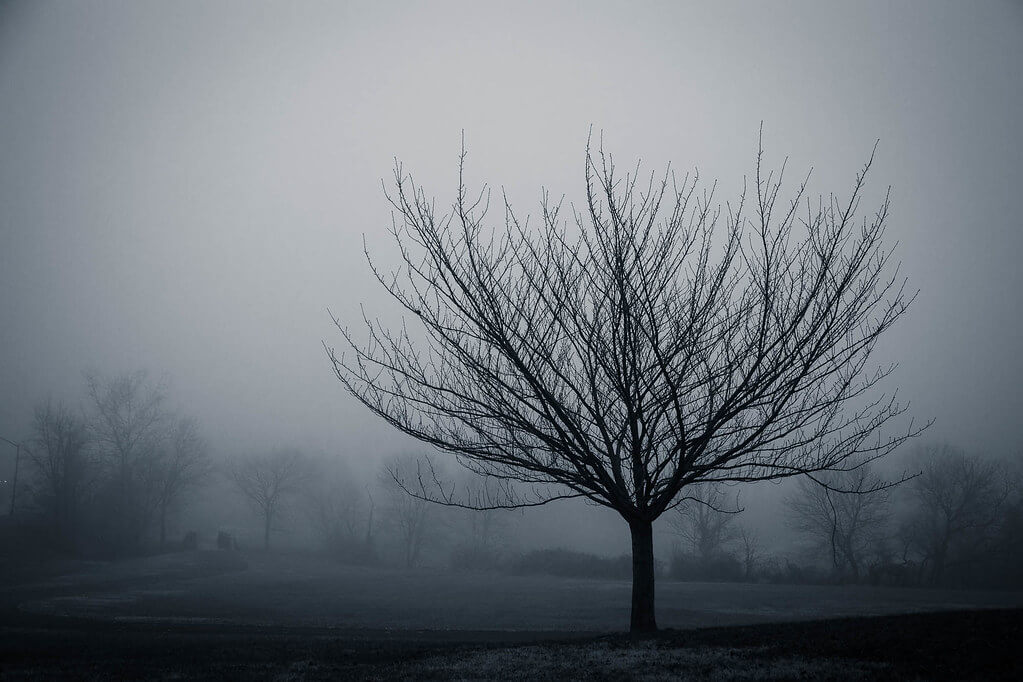 Joe - Tree on a Cold, Foggy Morning
