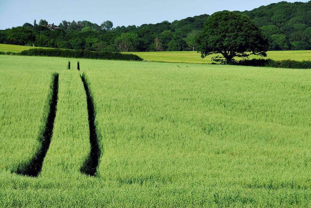 Richard Watkins LRPS - Crop Lines at Bonnington
