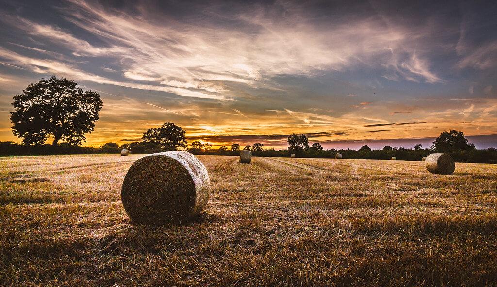 Matthew Johnson - hay bales at harvest