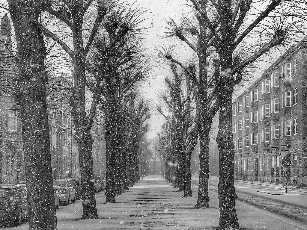 Erik Viggh - Snowing