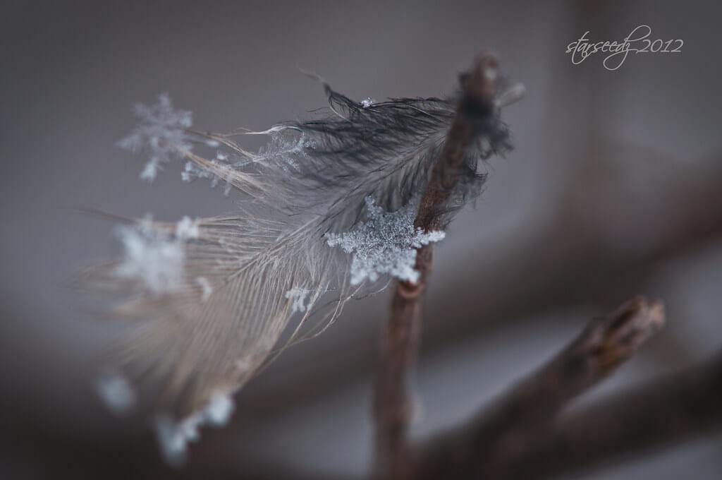 starseedz - macro snowflakes
