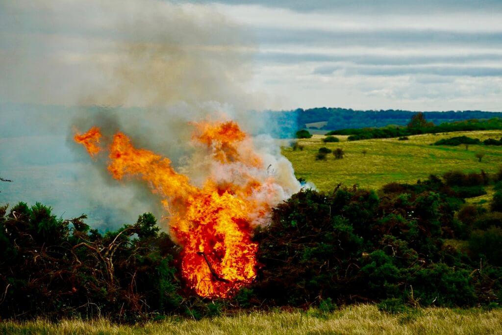 Edward Fletcher - Burning Gorse in Cheltenham