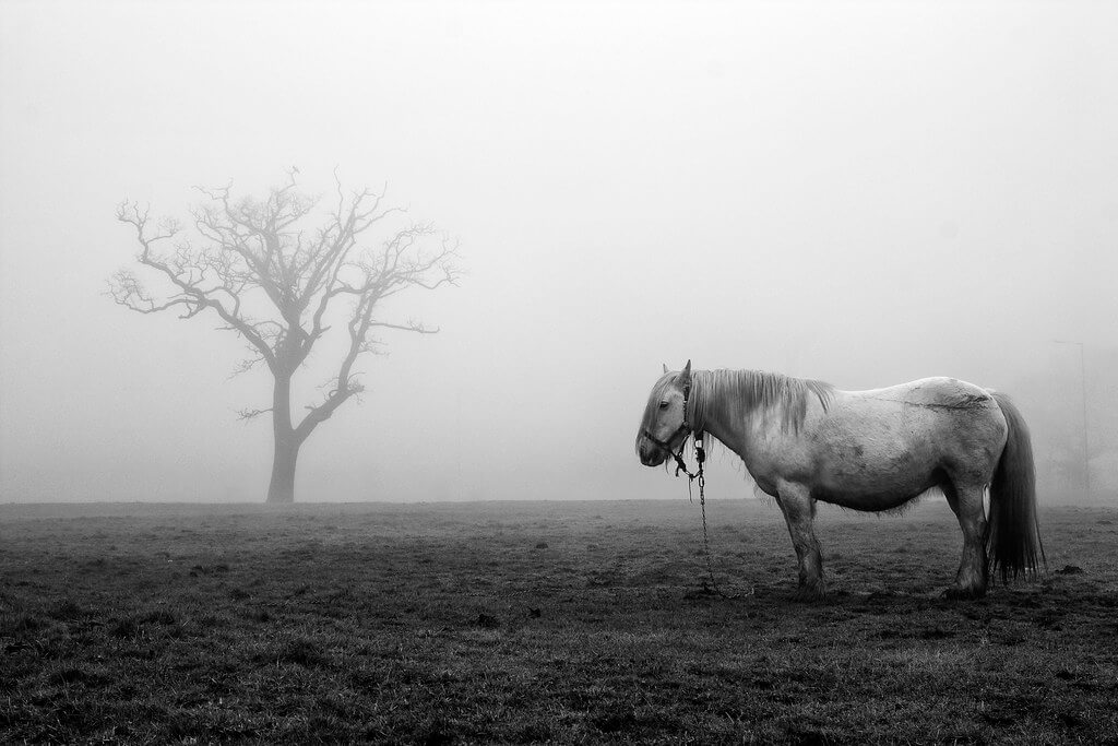 James Drury - tree, fog, horse