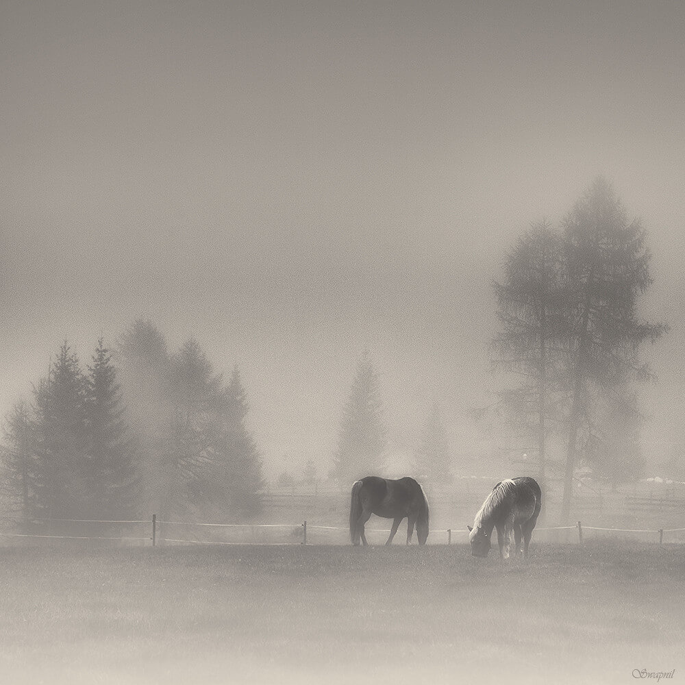 swapnil deshpande - horses, mist, trees and snow