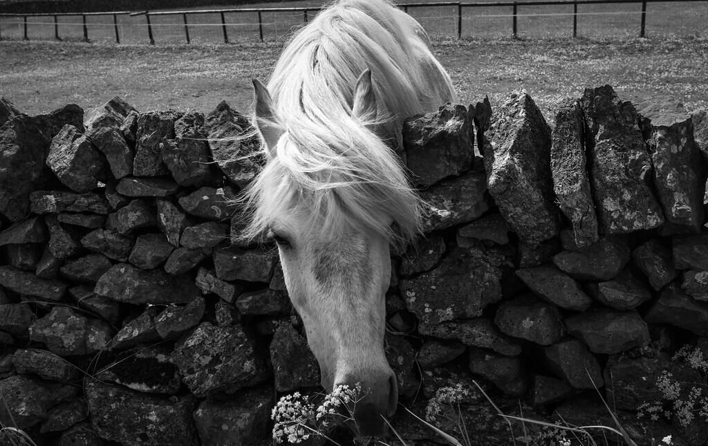 david constance - Horse