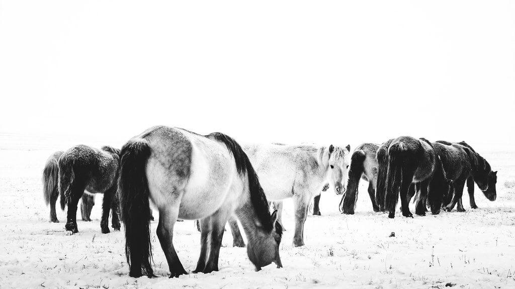 Shirren Lim - Mongolian horses