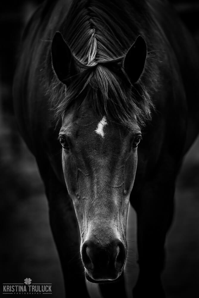 Kristina Truluck - black and white horse
