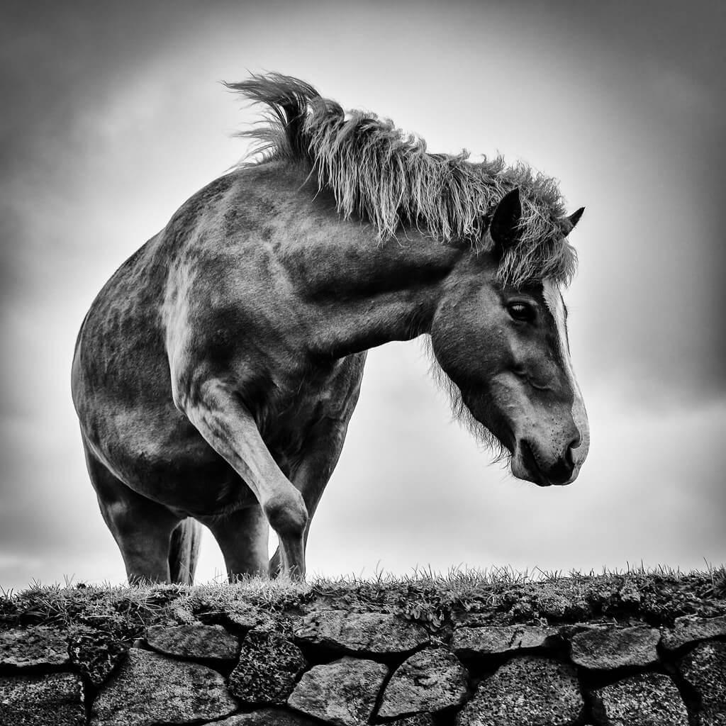 Andy Farmer - Icelandic Horse