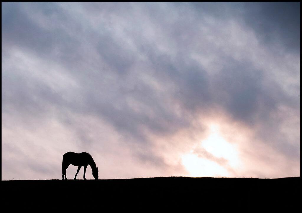 fraser price - horse silhouette