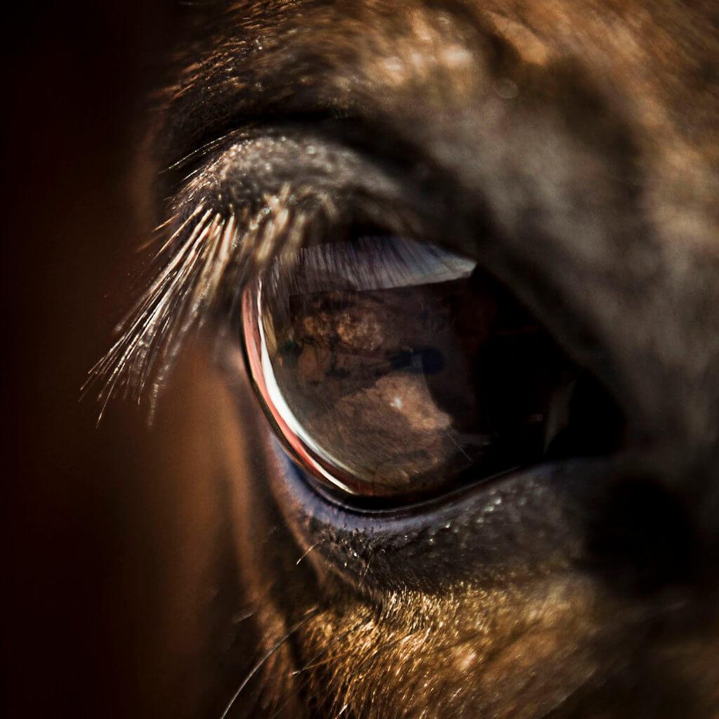 A W - eye of a horse