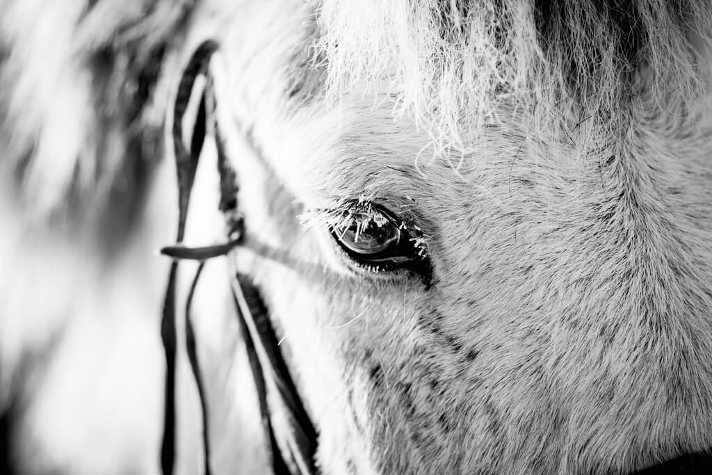 Shirren Lim - horse eyelashes