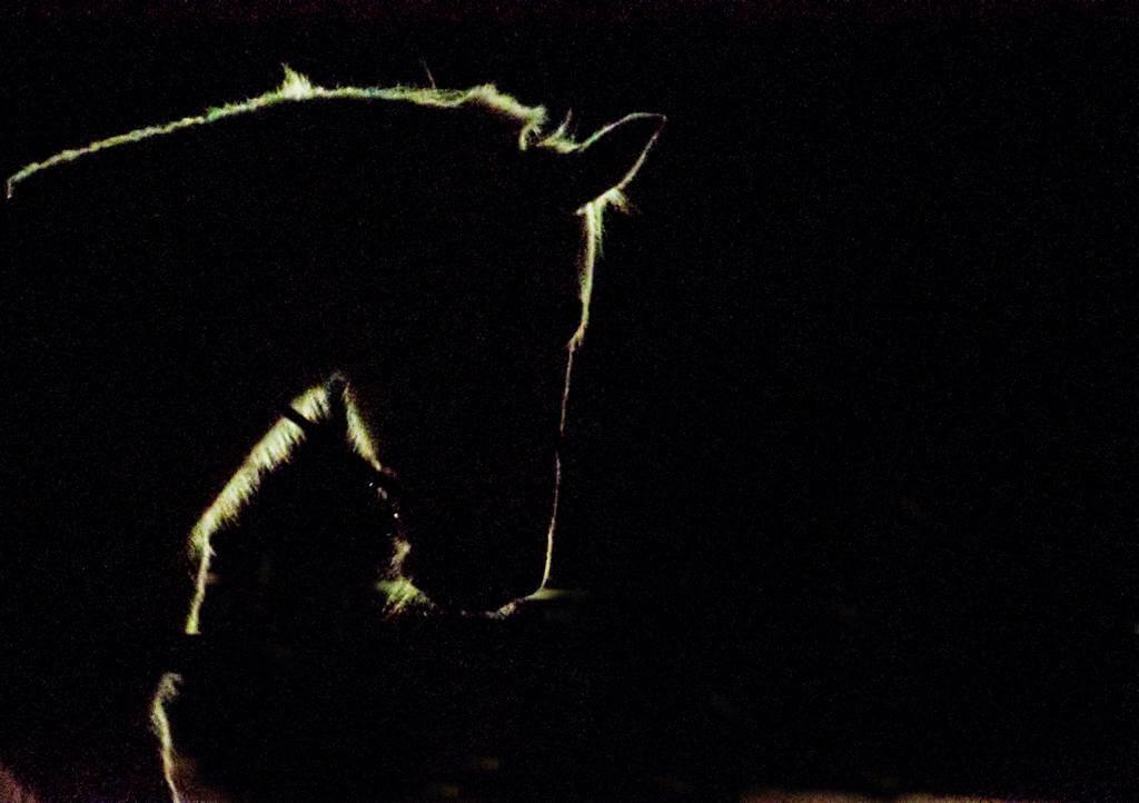 Ana GR - backlit horse