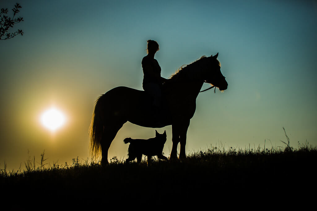 Bernie - horse and dog silhouette